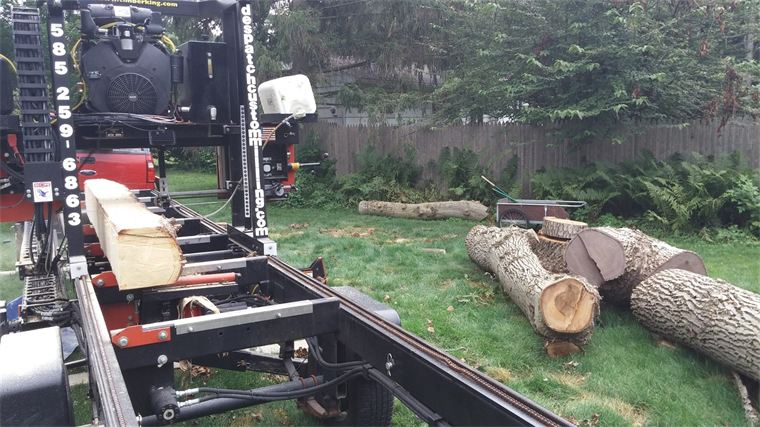 Black oak tree being milled on-site