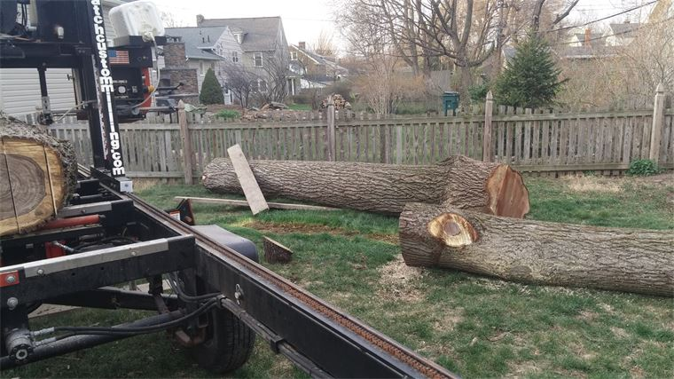 Milling an english walnut tree on-site